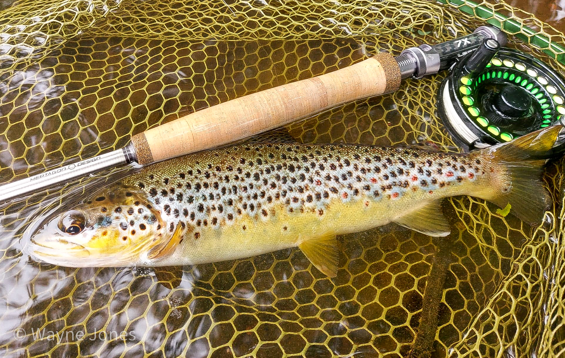 Loop 7X fly rod with Loop Opti dry fly reel used to catch wild brown trout with the fly shop flies