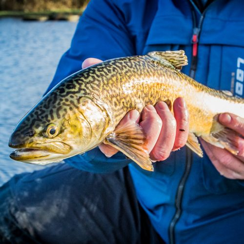 guides fishing sessions 02