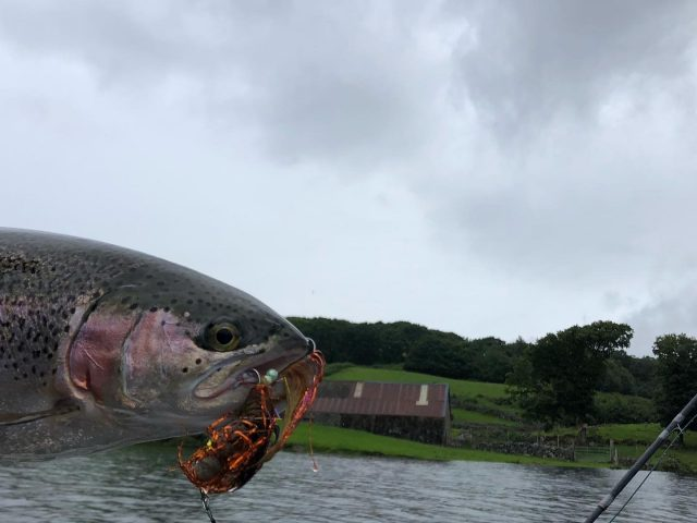 rainbow by shaed on pike fly